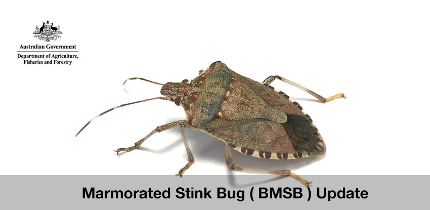 Marmorated Stink Bug ( BMSB ) Update