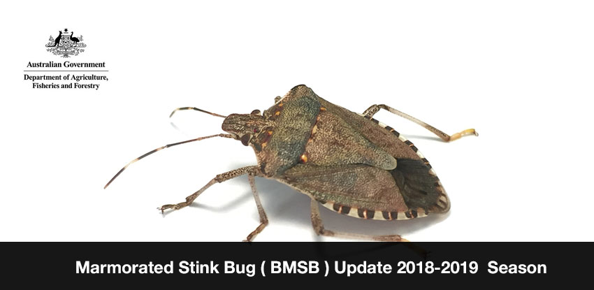 Marmorated Stink Bug ( BMSB ) Update 2018-2019 Season